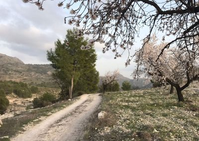 ES11. Ruta Vicorto- El Gallego